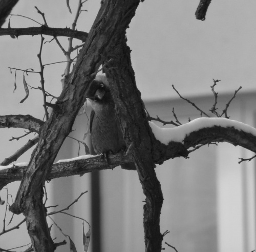 #Przyroda #Polska #Ptaki #Natura
