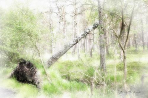 w rezerwacie Czołpino czas wolno płynie #Czołpino #RezerwatPrzyrody #drzewa #przyroda #krajobraz