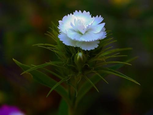 Kwiatek... jeden z wielu #Kwiat