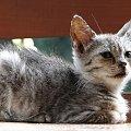 #zwierzęta #zwierze #kot #kotek #koty