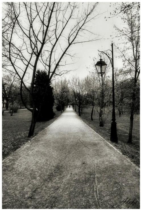 po horyzont ... #droga #park
