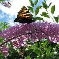 #motyl #kamień #ulotność #pszczoły #praca