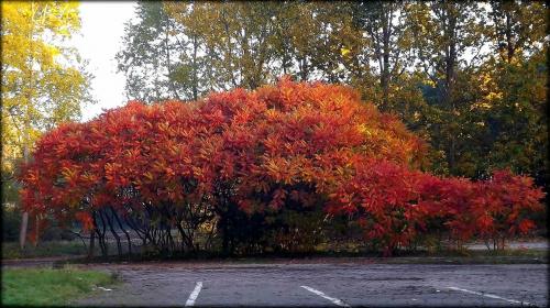 kolorowa jesień #jesien #kolory