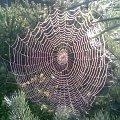 Sieć #pajęczyna