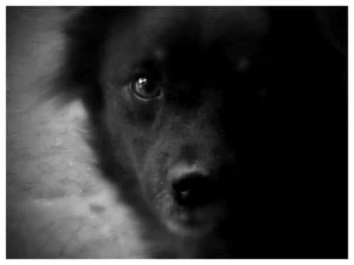 mój piesio ;) #pies