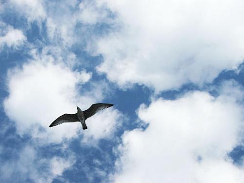 Wolność #ptak