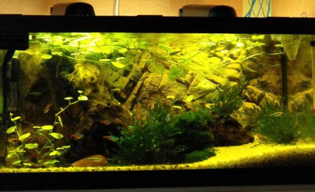 54 litry improwizacji #akwarium #amazonka #biotop #małe