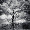 nadchodzi Armagedon #drzewo #krajobraz
