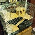#domek #klatka #szczury