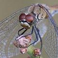 z poziomu robaczka #motyle #muchy #ważki