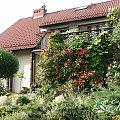 ogród w kolejnych latach #róża #RóżaFlamentanz #Rabata2008 #Ogród2008