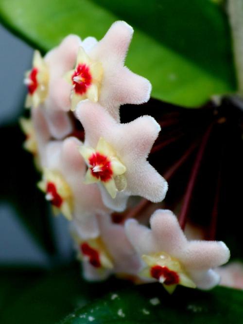 #kwiat #hoja #KwiatMakro