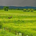 k jak konie #koń #konie #pastwisko #łąka